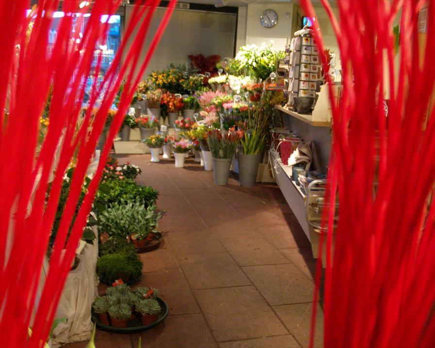 winkelen alkmaar t singeltje bloemwinkel
