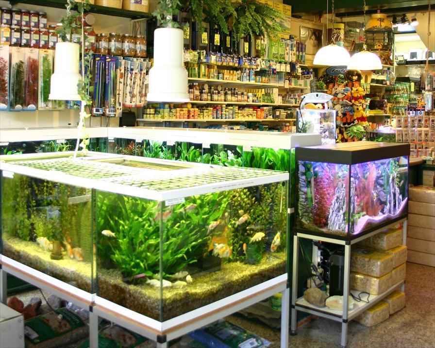 winkelen leiden vivarium stol