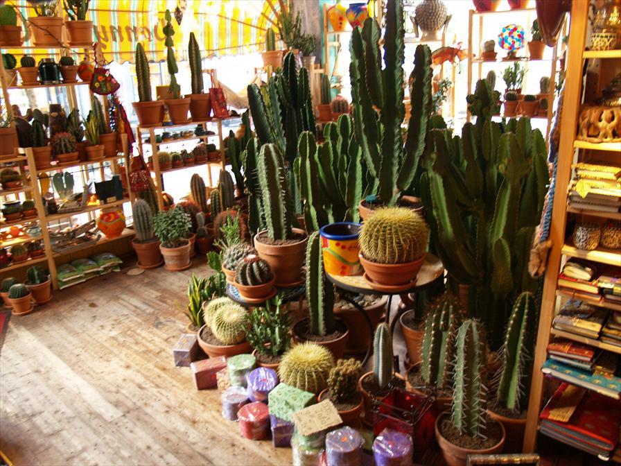 winkelen rotterdam danny de cactus